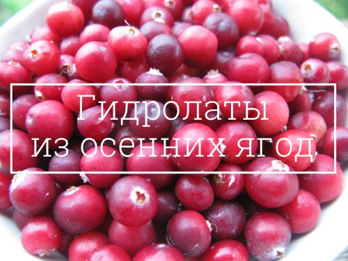 Гидролаты из ягод